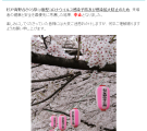 T__商工観光課_高野台さくら祭中止のお知らせ